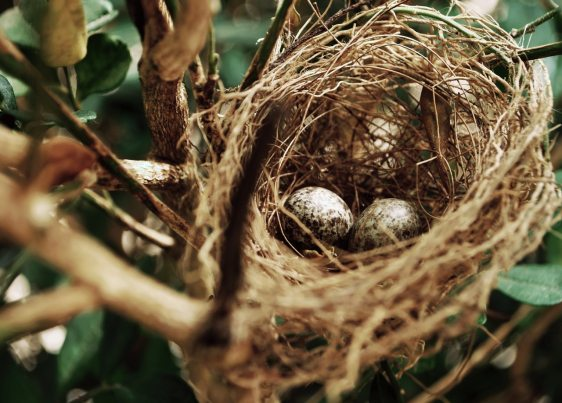 bird-s-nest-close-up-daytime-972994