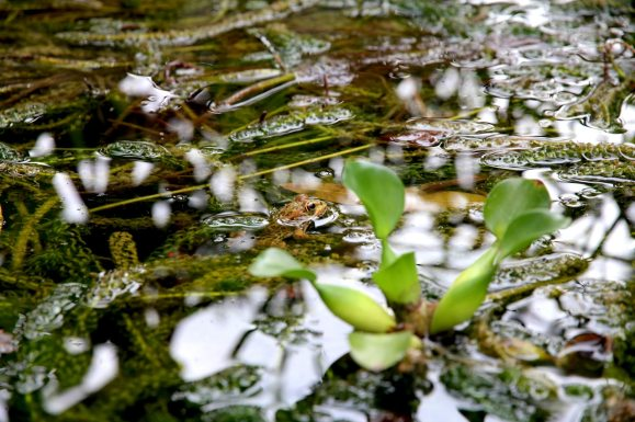 frog-leaves-nature-96131